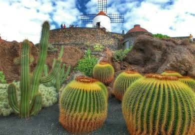 Kakteen vor Windmühle auf Lanzarote