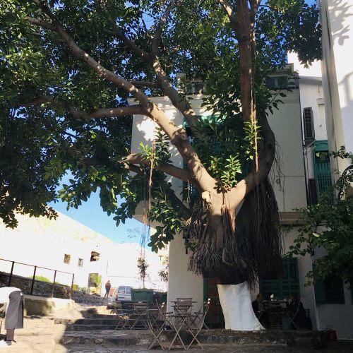 Baum auf kleinen Platz